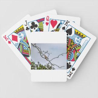 KOOKABURRA & WILLIE WAGTAIL QUEENSLAND AUSTRALIA BICYCLE PLAYING CARDS