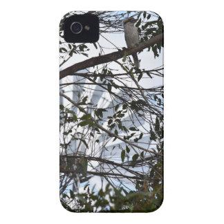 KOOKABURRA & WINDMILL RURAL QUEENSLAND AUSTRALIA iPhone 4 COVERS