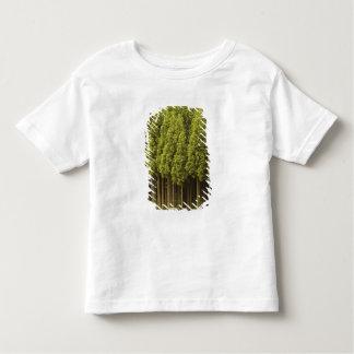 Koya Sugi Cedar Trees T Shirt