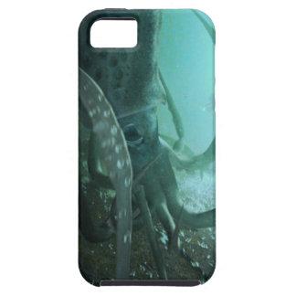 Kraken Case