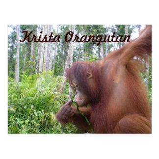 Krista Orangutan Fan Club merchandise Postcard