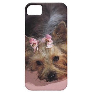 KRW Adorable Yorkie Dog iPhone 5 Cover