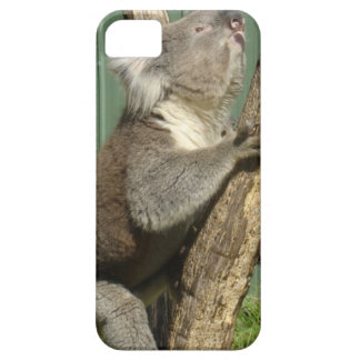 Kuddly Koalas in Australia iPhone 5 Cases