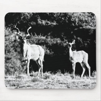 Kudu bull and cow in black & white - Mousepad