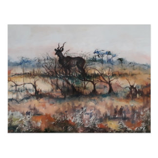 Kudu Bull Postcard