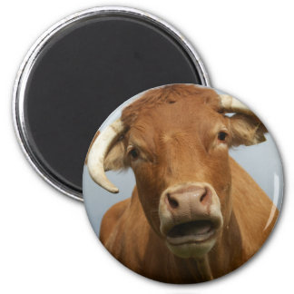 Kuh 6 Cm Round Magnet