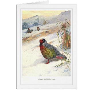 Kuser's Blood Partridge; Card