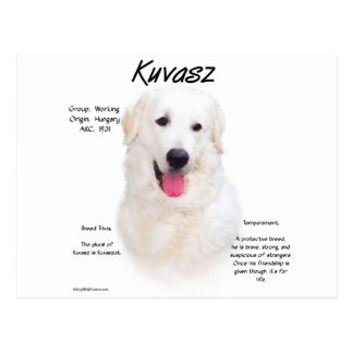 Kuvasz History Design Postcard