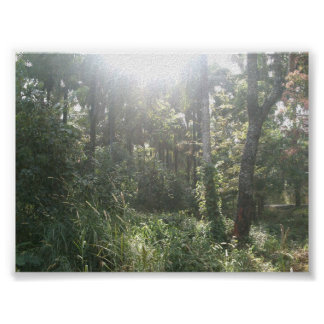 Kwoi Forest Poster