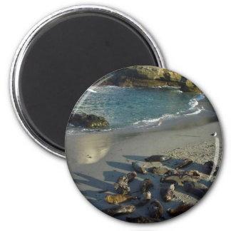 La Jolla Cove Beach Waves Sand Seals Fridge Magnet