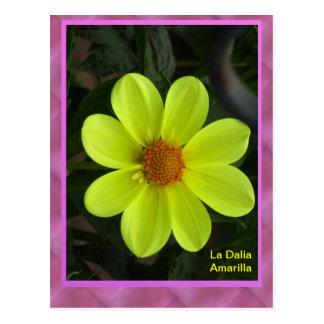 La Tarjeta Postal - La Dalia Amarilla Post Cards