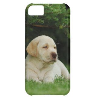 Lab iPhone 5C Case