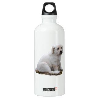 Lab Puppy Sitting Water Bottle