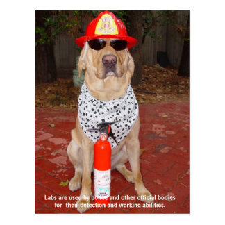 Lab Traits - Use by Police & Firemen Postcard