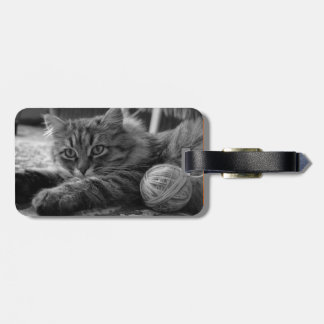 Label luggage images cat tags for bags