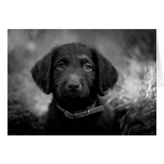 Labradoodle in B&W Notecard
