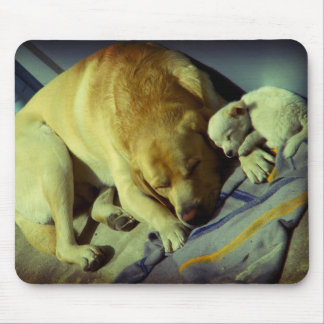 Labrador and cute puppy sleeping mousepads