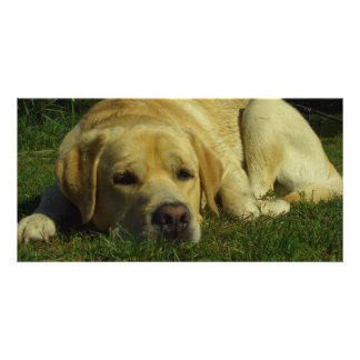 Labrador chilling in the green grass customized photo card