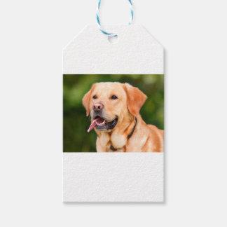 Labrador Dog Gift Tags