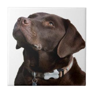 labrador dog look forward to love peace joy tile