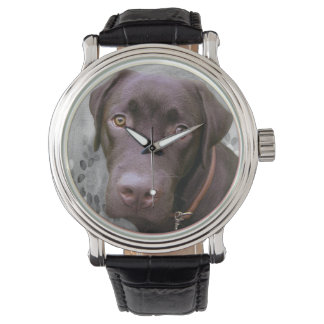 Labrador Jimmy -. - Watch