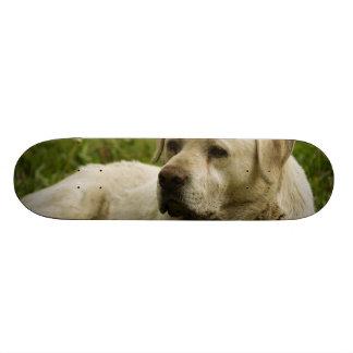 Labrador Photo Skateboard Decks