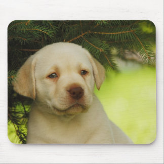 Labrador puppy mouse pad