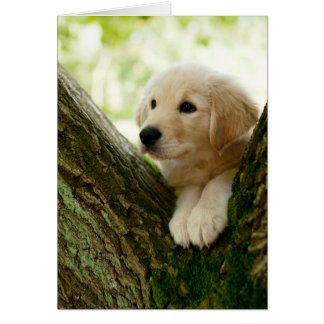 Labrador Puppy Sitting In A Woodland Setting Card