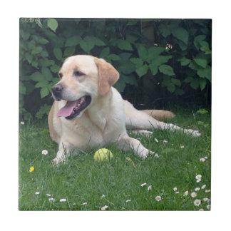 Labrador Retreiver Tile