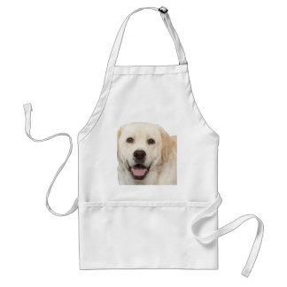 Labrador retriever 1 standard apron