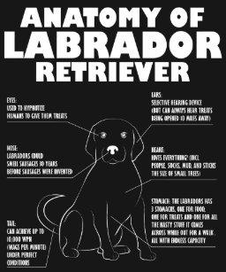 fd0e8269 Labrador Owners T-Shirts & Shirt Designs | Zazzle.com.au