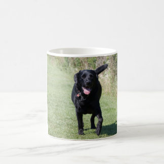 Labrador Retriever black dog beautiful photo, gift Basic White Mug
