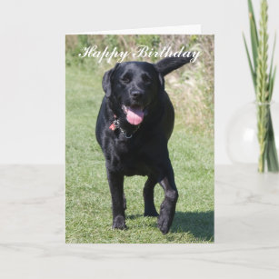 Labrador Retriever Black Dog Happy Birthday Card