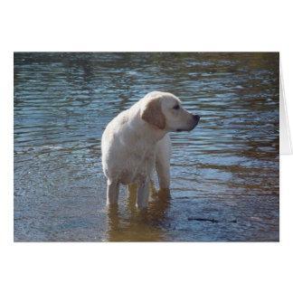 Labrador Retriever Card At The Lake