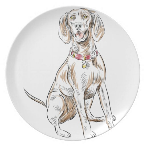 plate hair style labrador retriever drawing plate zazzle 4288