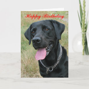 Labrador Retriever Dog Happy Birthday Card