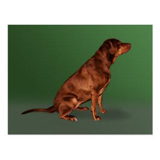 Labrador Retriever Dog Postcard