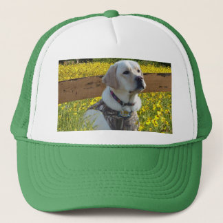 Labrador Retriever Hat In The Field