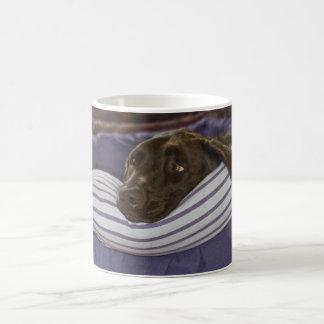 Labrador Retriever In Bed Coffee Mug