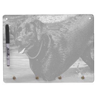 Labrador Retriever in Water Horizontal Dry Erase Whiteboards