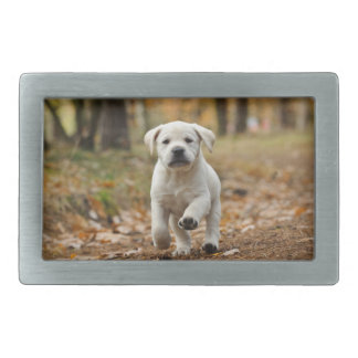 Labrador retriever puppy belt buckles