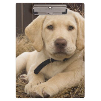 Labrador Retriever puppy Clipboard