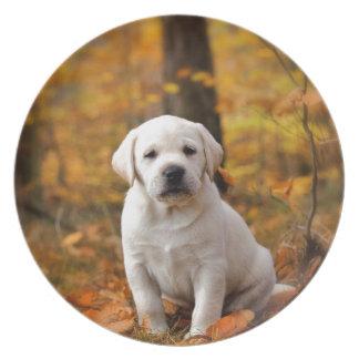Labrador retriever puppy dinner plates
