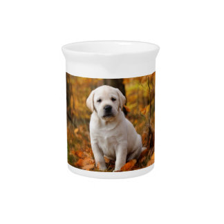 Labrador retriever puppy pitcher
