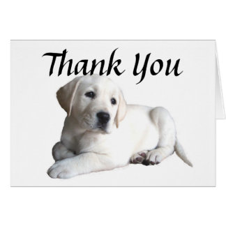 Labrador Retriever Thank You Card