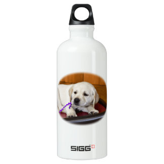 Labrador Retriever Waking Up Water Bottle