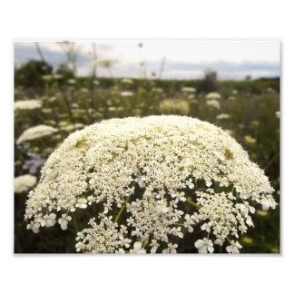 Lace Flower Photo Print
