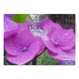 Lacecap Hydrangea Note Card