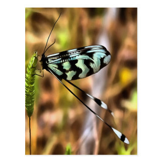 Lacewing Postcard