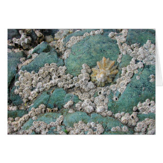 Lacey barnacles decorate green rock card